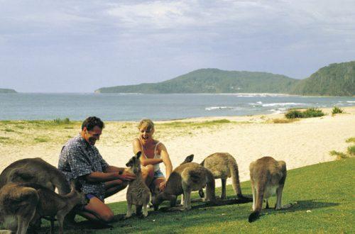 Partez en Australie pour votre lune de miel