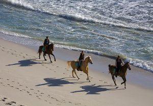 Faire une balade à cheval en Afrique du Sud